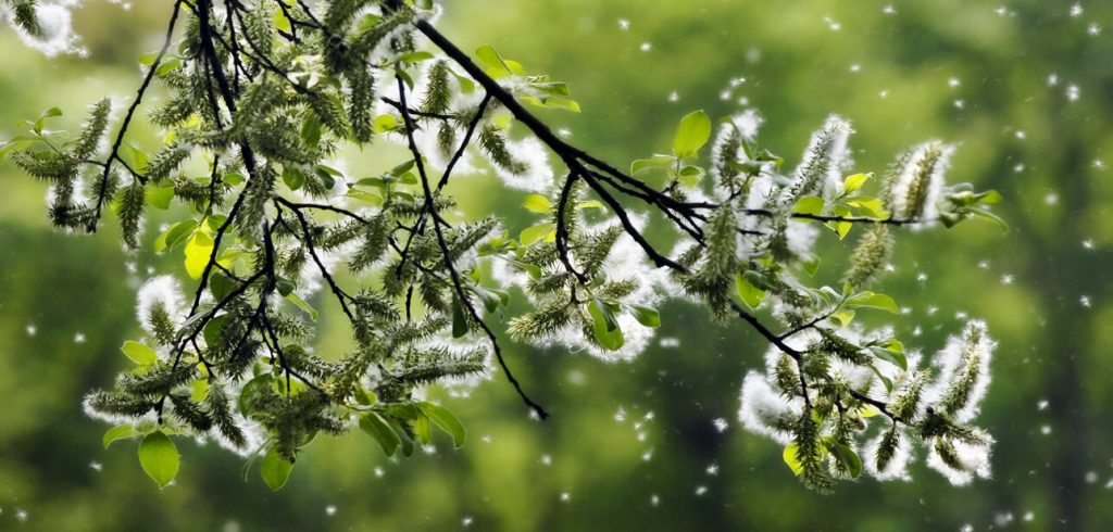 Pollenbildung - Wohnraumlüftung für Allergiker